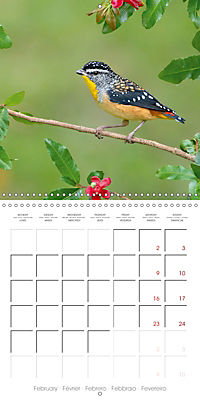 Songbirds of Australia (Wall Calendar 2019 300 × 300 mm Square) - Produktdetailbild 2