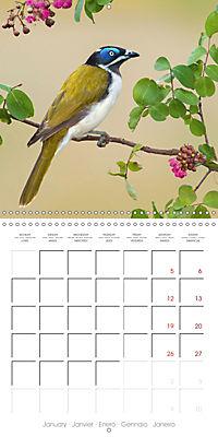 Songbirds of Australia (Wall Calendar 2019 300 × 300 mm Square) - Produktdetailbild 1