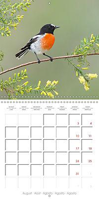 Songbirds of Australia (Wall Calendar 2019 300 × 300 mm Square) - Produktdetailbild 8