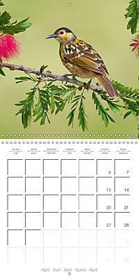 Songbirds of Australia (Wall Calendar 2019 300 × 300 mm Square) - Produktdetailbild 4