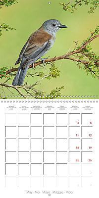 Songbirds of Australia (Wall Calendar 2019 300 × 300 mm Square) - Produktdetailbild 5