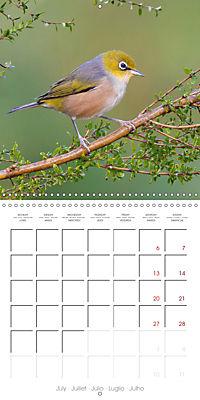 Songbirds of Australia (Wall Calendar 2019 300 × 300 mm Square) - Produktdetailbild 7