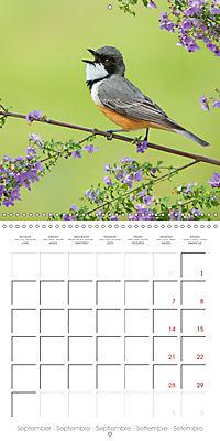 Songbirds of Australia (Wall Calendar 2019 300 × 300 mm Square) - Produktdetailbild 9