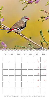 Songbirds of Australia (Wall Calendar 2019 300 × 300 mm Square) - Produktdetailbild 11