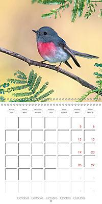 Songbirds of Australia (Wall Calendar 2019 300 × 300 mm Square) - Produktdetailbild 10
