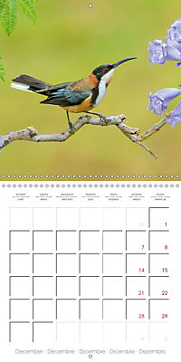 Songbirds of Australia (Wall Calendar 2019 300 × 300 mm Square) - Produktdetailbild 12