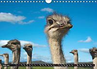 South Africa / UK-Version (Wall Calendar 2019 DIN A4 Landscape) - Produktdetailbild 6
