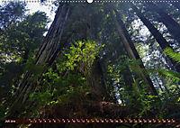 Spaziergang im Wald (Wandkalender 2019 DIN A2 quer) - Produktdetailbild 7