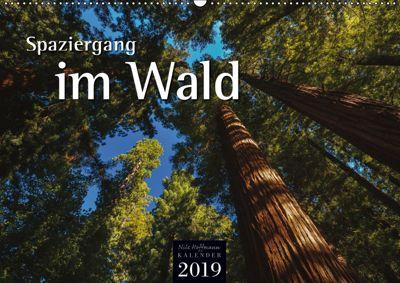 Spaziergang im Wald (Wandkalender 2019 DIN A2 quer), Nils Hoffmann
