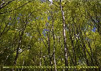 Spaziergang im Wald (Wandkalender 2019 DIN A2 quer) - Produktdetailbild 6