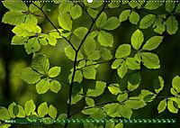 Spaziergang im Wald (Wandkalender 2019 DIN A2 quer) - Produktdetailbild 5