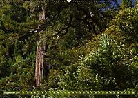Spaziergang im Wald (Wandkalender 2019 DIN A2 quer) - Produktdetailbild 9