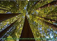 Spaziergang im Wald (Wandkalender 2019 DIN A2 quer) - Produktdetailbild 4