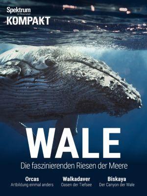 Spektrum Kompakt: Spektrum Kompakt - Wale