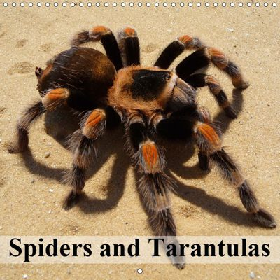 Spiders and Tarantulas (Wall Calendar 2019 300 × 300 mm Square), Elisabeth Stanzer