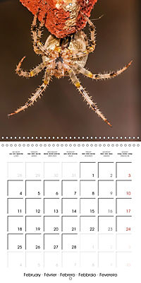 Spiders and Tarantulas (Wall Calendar 2019 300 × 300 mm Square) - Produktdetailbild 2
