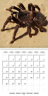 Spiders and Tarantulas (Wall Calendar 2019 300 × 300 mm Square) - Produktdetailbild 1