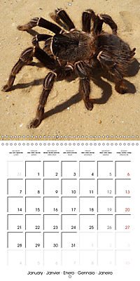 Spiders and Tarantulas (Wall Calendar 2019 300 × 300 mm Square) - Produktdetailbild 1