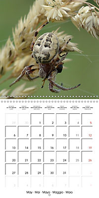 Spiders and Tarantulas (Wall Calendar 2019 300 × 300 mm Square) - Produktdetailbild 5