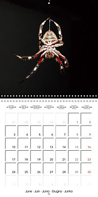 Spiders and Tarantulas (Wall Calendar 2019 300 × 300 mm Square) - Produktdetailbild 6