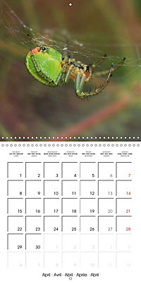 Spiders and Tarantulas (Wall Calendar 2019 300 × 300 mm Square) - Produktdetailbild 4