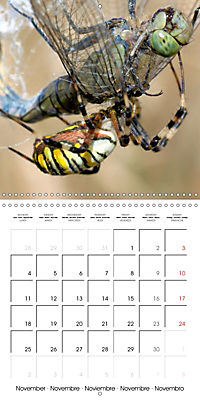 Spiders and Tarantulas (Wall Calendar 2019 300 × 300 mm Square) - Produktdetailbild 11