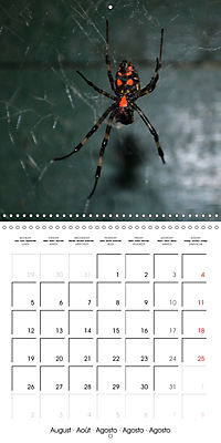 Spiders and Tarantulas (Wall Calendar 2019 300 × 300 mm Square) - Produktdetailbild 8