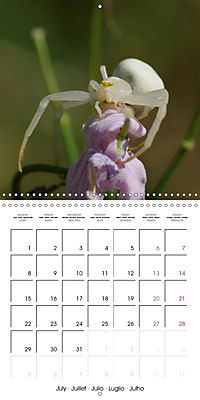 Spiders and Tarantulas (Wall Calendar 2019 300 × 300 mm Square) - Produktdetailbild 7