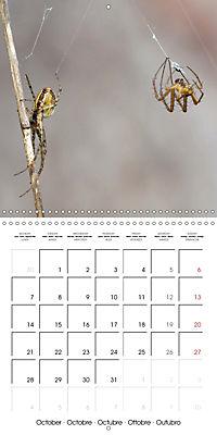 Spiders and Tarantulas (Wall Calendar 2019 300 × 300 mm Square) - Produktdetailbild 10