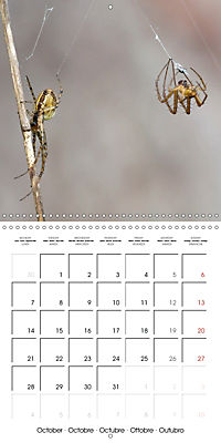 Spiders and Tarantulas (Wall Calendar 2019 300 × 300 mm Square) - Produktdetailbild 10