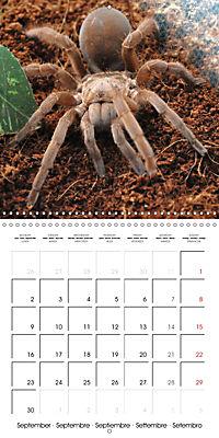 Spiders and Tarantulas (Wall Calendar 2019 300 × 300 mm Square) - Produktdetailbild 9