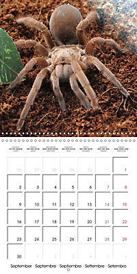 Spiders and Tarantulas (Wall Calendar 2019 300 × 300 mm Square) - Produktdetailbild 9