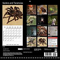 Spiders and Tarantulas (Wall Calendar 2019 300 × 300 mm Square) - Produktdetailbild 13