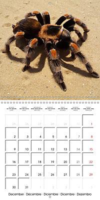 Spiders and Tarantulas (Wall Calendar 2019 300 × 300 mm Square) - Produktdetailbild 12