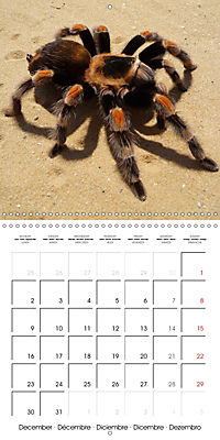 Spiders and Tarantulas (Wall Calendar 2019 300 × 300 mm Square) - Produktdetailbild 12