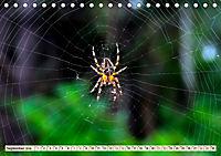 Spinnennetze - Wunder der Natur (Tischkalender 2019 DIN A5 quer) - Produktdetailbild 9