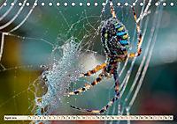Spinnennetze - Wunder der Natur (Tischkalender 2019 DIN A5 quer) - Produktdetailbild 4