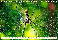 Spinnennetze - Wunder der Natur (Tischkalender 2019 DIN A5 quer) - Produktdetailbild 6
