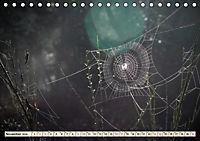 Spinnennetze - Wunder der Natur (Tischkalender 2019 DIN A5 quer) - Produktdetailbild 11