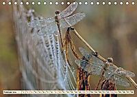 Spinnennetze - Wunder der Natur (Tischkalender 2019 DIN A5 quer) - Produktdetailbild 2