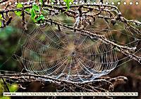 Spinnennetze - Wunder der Natur (Tischkalender 2019 DIN A5 quer) - Produktdetailbild 1