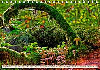 Spinnennetze - Wunder der Natur (Tischkalender 2019 DIN A5 quer) - Produktdetailbild 8