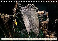 Spinnennetze - Wunder der Natur (Tischkalender 2019 DIN A5 quer) - Produktdetailbild 5