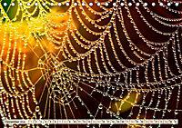 Spinnennetze - Wunder der Natur (Tischkalender 2019 DIN A5 quer) - Produktdetailbild 12