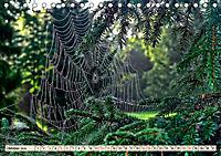 Spinnennetze - Wunder der Natur (Tischkalender 2019 DIN A5 quer) - Produktdetailbild 10