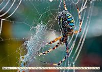 Spinnennetze - Wunder der Natur (Wandkalender 2019 DIN A2 quer) - Produktdetailbild 4