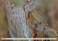Spinnennetze - Wunder der Natur (Wandkalender 2019 DIN A2 quer) - Produktdetailbild 2