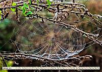 Spinnennetze - Wunder der Natur (Wandkalender 2019 DIN A2 quer) - Produktdetailbild 1
