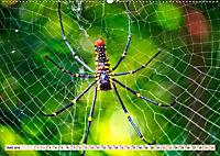 Spinnennetze - Wunder der Natur (Wandkalender 2019 DIN A2 quer) - Produktdetailbild 6