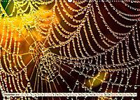 Spinnennetze - Wunder der Natur (Wandkalender 2019 DIN A2 quer) - Produktdetailbild 12